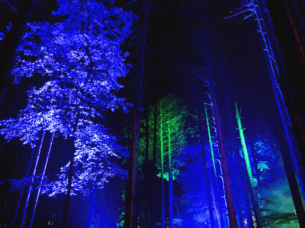 EF_Lights-in-Trees