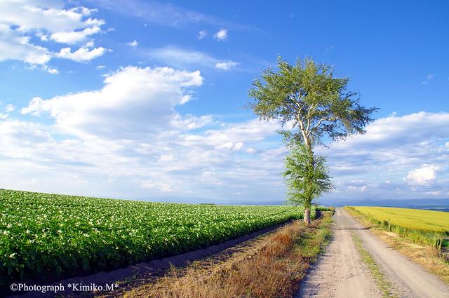 一本木の路