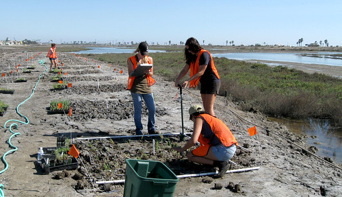 Student interns from the California State University System working on a watershed management project