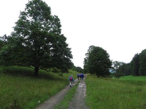 20150727 02 268 Romea Wald Weg Baum Pilger