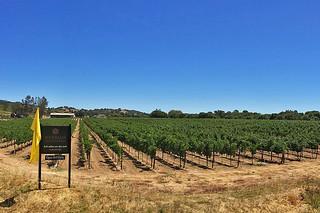 Merriam Vineyards - Vineyards