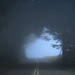 Ridgecrest Boulevard in the Fog by fksr