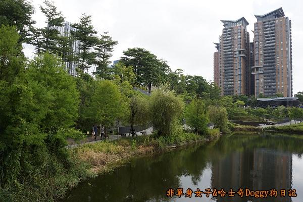 台中秋紅谷14