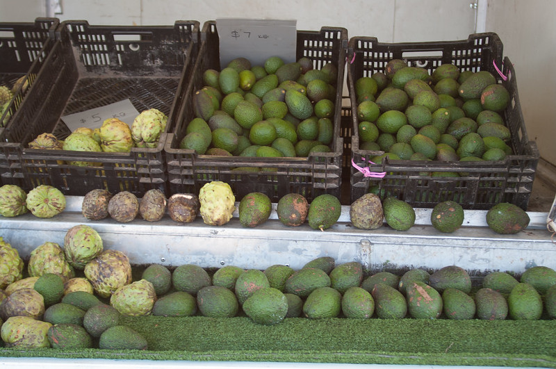 Avocado produce stall at the Cleveland Markets, Brisbane QLD Australia  20150802-VPR00309.jpg
