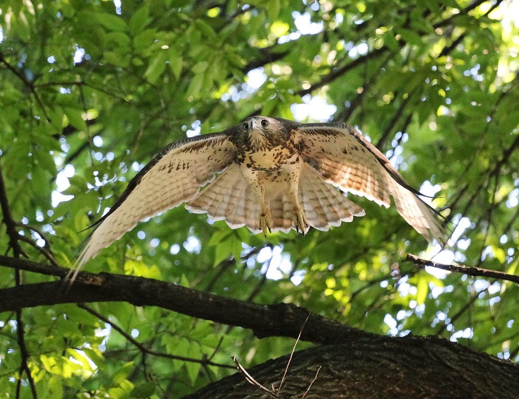 Fledgling in Tompkins Square