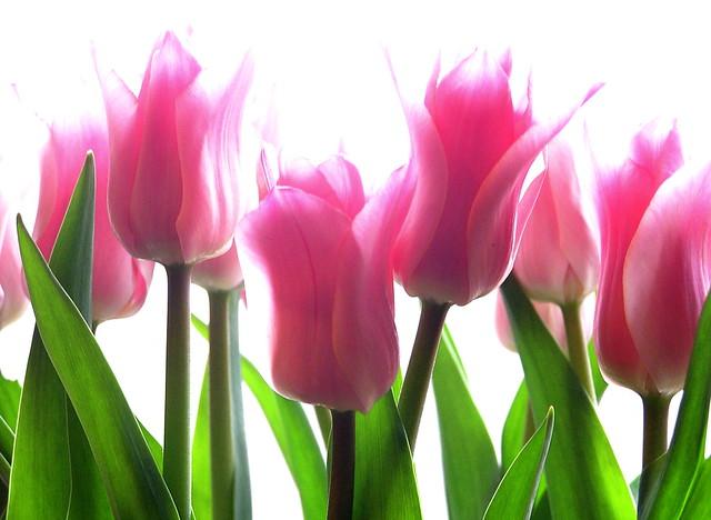 цветы которые можно сделать из бисера.