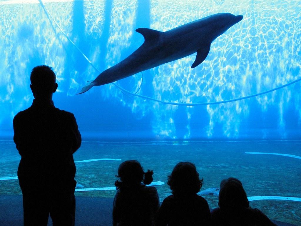 Rimini: i quattro delfini restano sequestrati