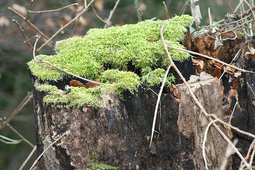 mosses and trees relationship help