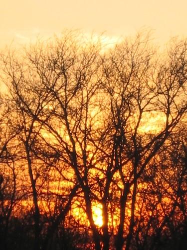 trees sunset texas ferris