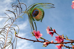 Feather + Fruit Tree