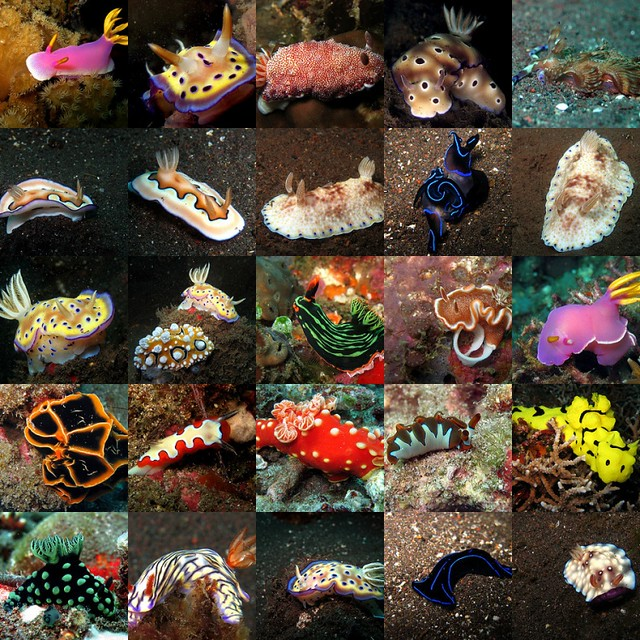 Nudibranch Mosaic