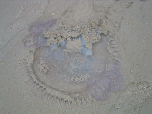 thailand, railay, phra nang, jellyfish IMG_1207.JPG