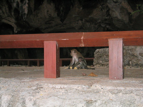 thailand, railay, monkeys, phra nang IMG_1232.JPG
