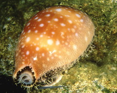 slug(0.0), snails and slugs(0.0), animal(1.0), organism(1.0), marine biology(1.0), invertebrate(1.0), macro photography(1.0), stony coral(1.0), marine invertebrates(1.0), fauna(1.0), close-up(1.0), underwater(1.0), wildlife(1.0),