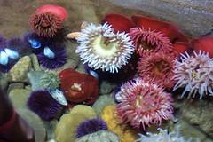 invertebrate(0.0), coral reef(1.0), coral(1.0), flower(1.0), marine biology(1.0), cnidaria(1.0), reef(1.0), sea anemone(1.0),