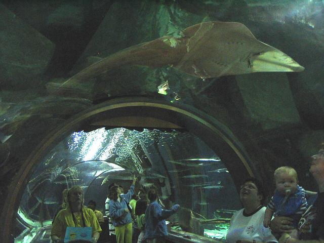 Underwater Adventures Aquarium At The Mall Of America