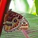 Butterfly Intricacies by WisDoc