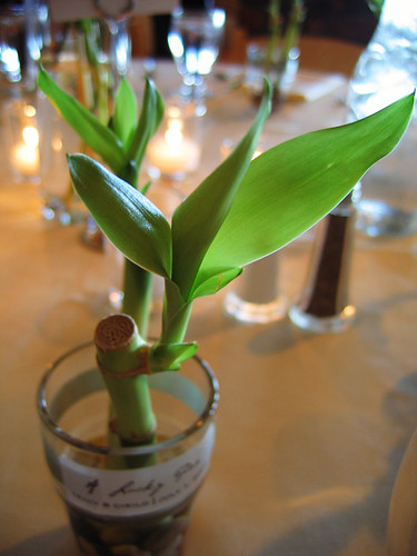 BAMBOO PLANT WEDDING FAVORS