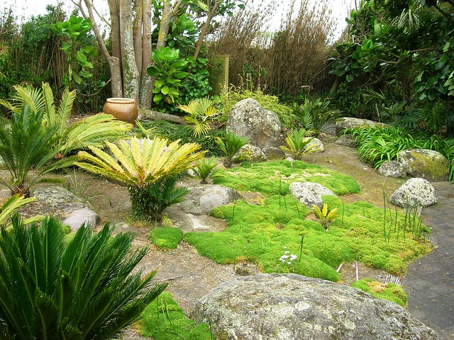 Cycads at Paloma Gardens | Also see Paloma Gardens, Cliive ...