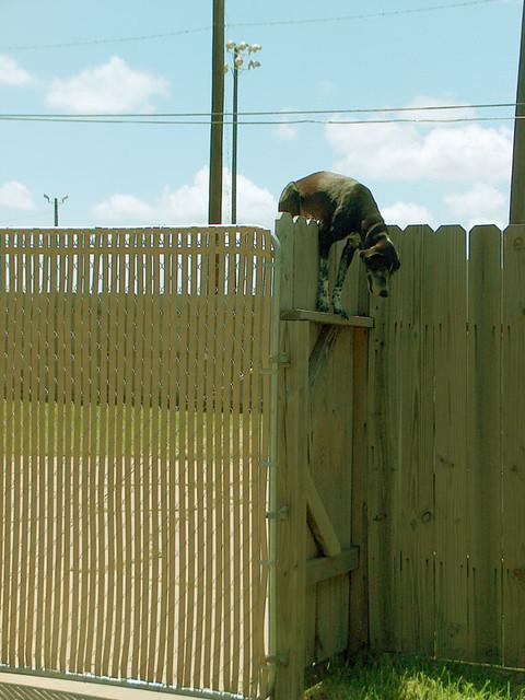 Dog Fence Systems - Sureguard Fencing