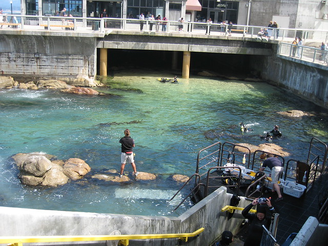 Monterey Bay Aquarium Flickr Photo Sharing