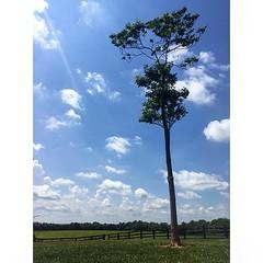 Bluegrass, Blue Sky - #kentucky #kentuckypics #bluegrass #sky #clouds #rural