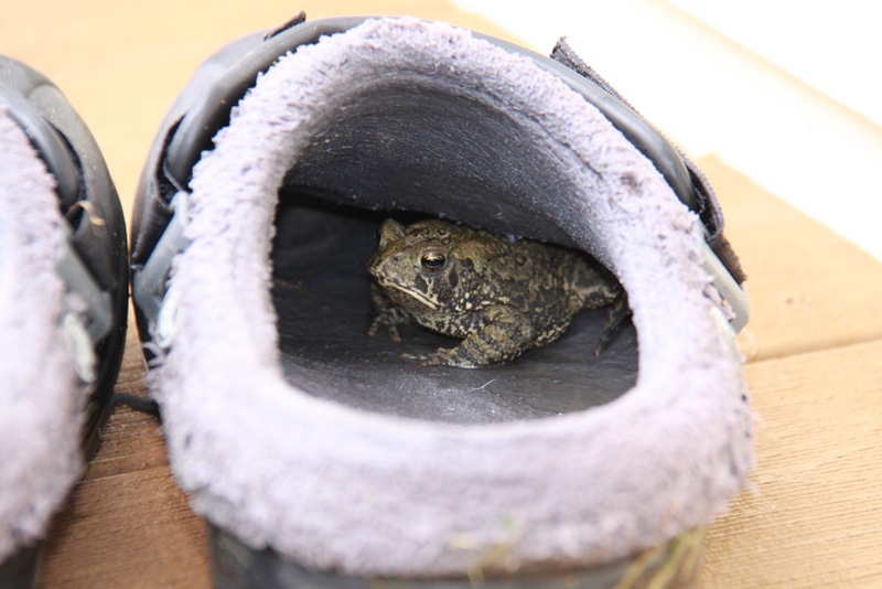 frog in crocs (2)