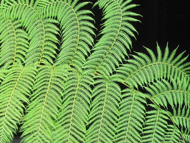 Fern Leaf Pattern by Sherrie Thai