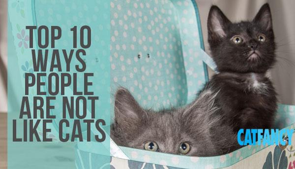 people-unlike-cats