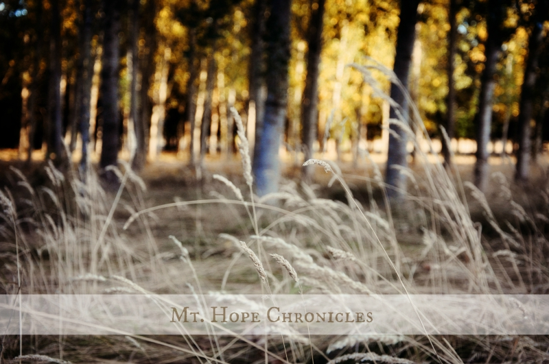 August @ Mt. Hope Chronicles
