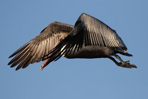 bird flight 7d2 7dm2