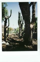 Hilltop Cactus Garden