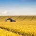 Summer barn by pixellesley