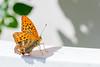 Butterfly 16072015-02