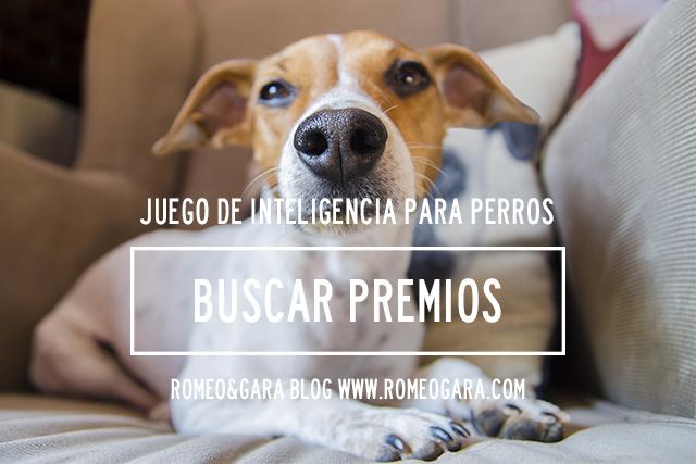 Juego de inteligencia casero para perros: Buscar premios