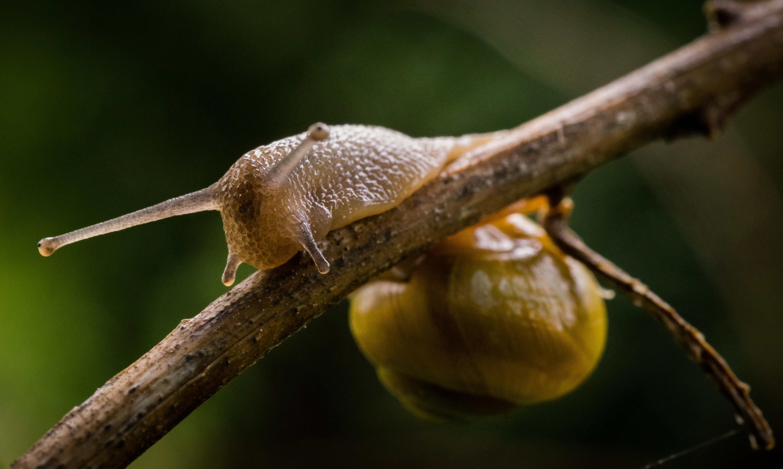 [OC][6000x3591] Snail