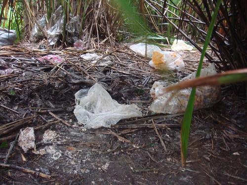 塑膠袋以及橡皮圈,對野生動物都是陌生的物品,可能誤食或誤入圈套。(圖片來源:陽管處)