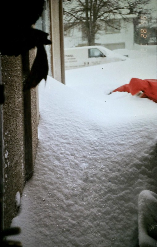 Looking out the front door as brother tries to visit. Photo Kallie Price