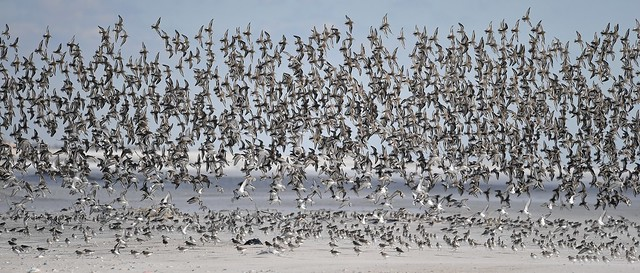 Thousands of Birds