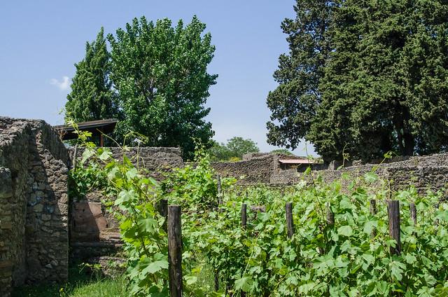 20150519-Pompeii-Vineyards-0536