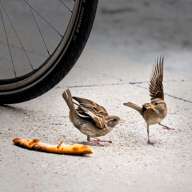 Pecking Order 3