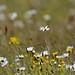 Bleachfield Meadow Markinch by sarniebill1