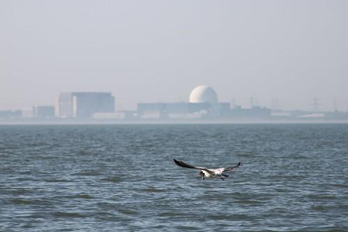 海岸線上的發電站。圖片來源:INTO