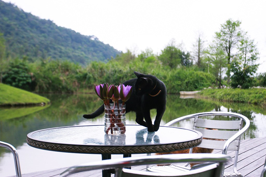 """這隻黑貓很活潑,會跟""""毛衣""""玩,會跳上跳下看東西,還會跟狗一起鬧..XD"""