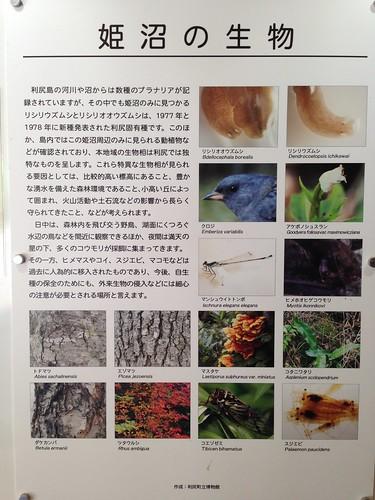 rishiri-island-himenuma-living-things