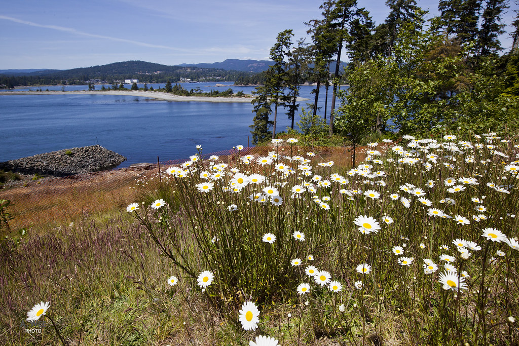 Wildflower by the bay