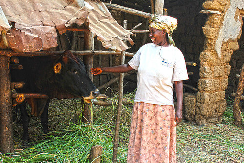 CezarieMukabanda, Dairy farmer, Bishweshwe village, Rwamagana district in the Eastern Province, Rwanda