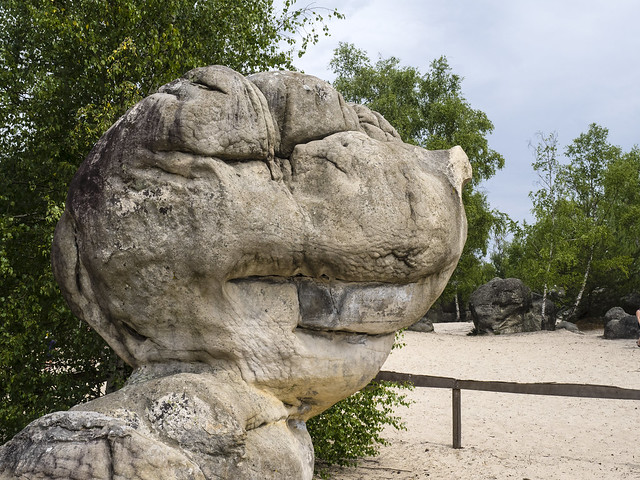 Fontainebleau Forest 468 (49)