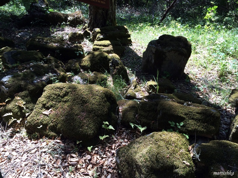 Calistoga_Petrified Forest (11)