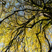 Autumn canopy on Lewesdon Hill